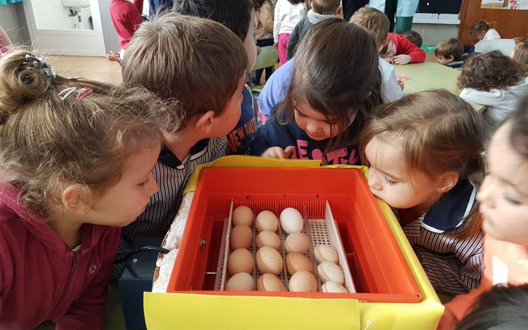 Proyecto «Los pollitos» – Infantil 3 años